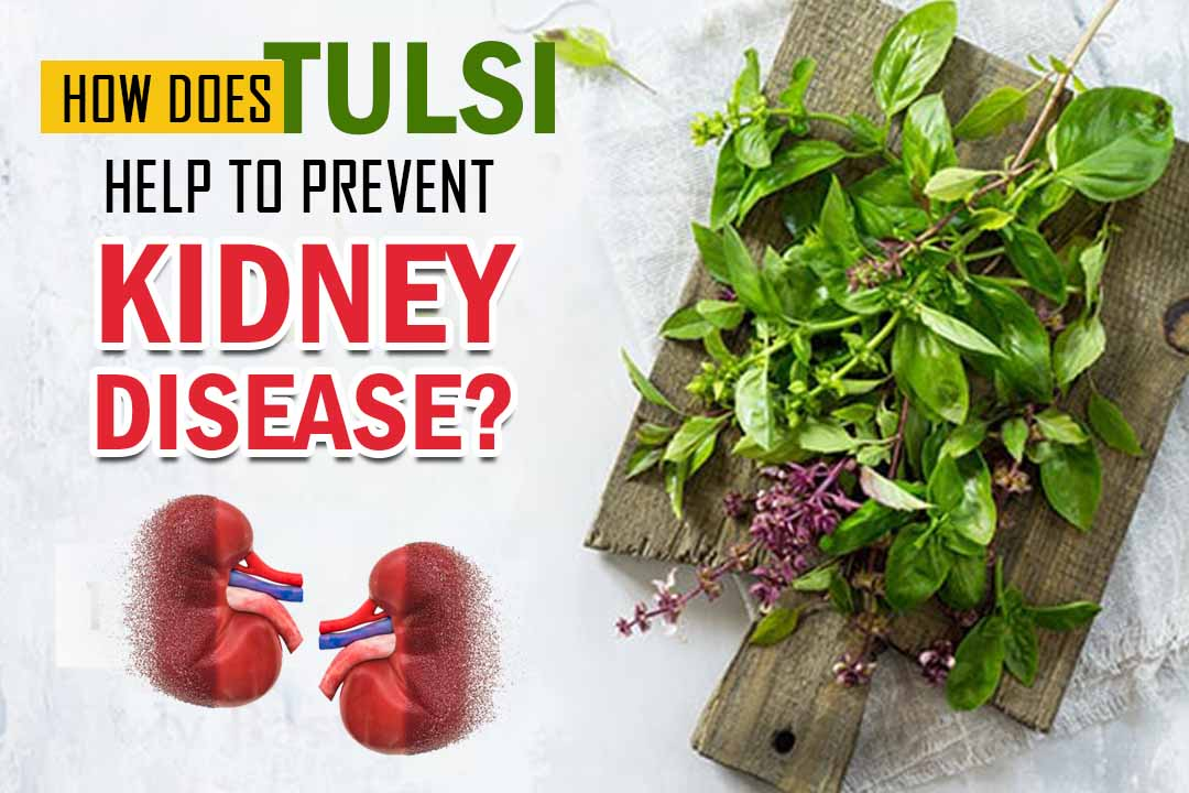 How Does Tulsi Help To Prevent Kidney Disease