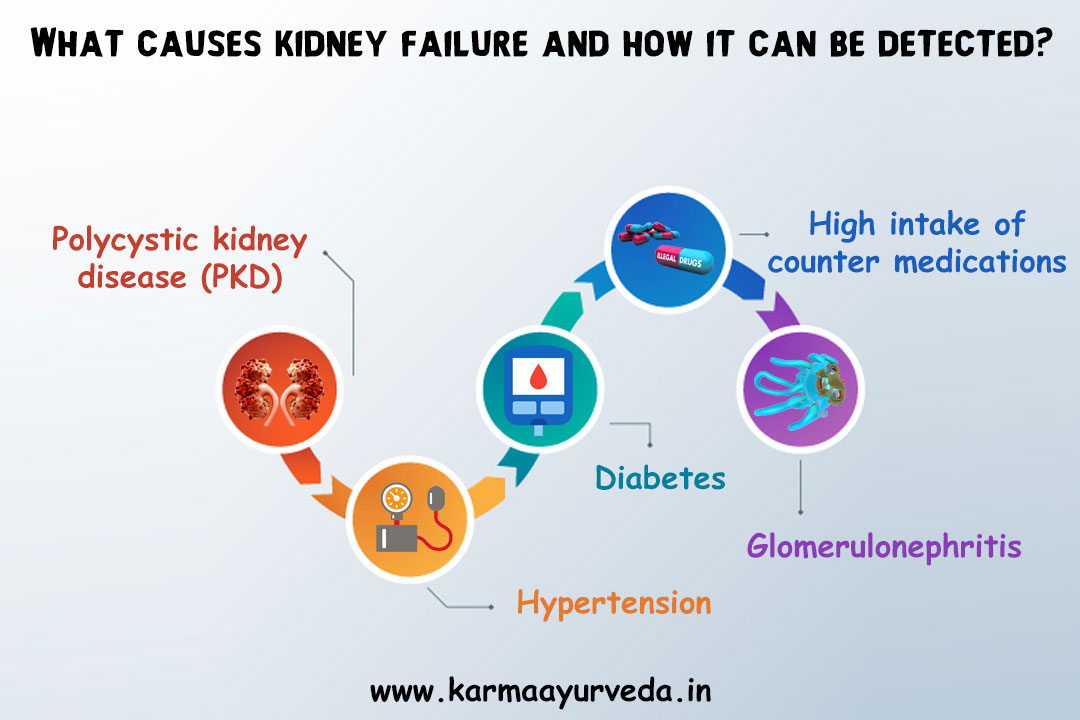Best Kidney Failure Ayurvedic Treatment An End To Kidney Problems