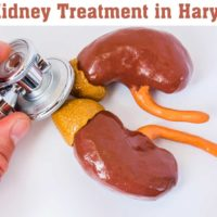 Kidney Treatment in Haryana