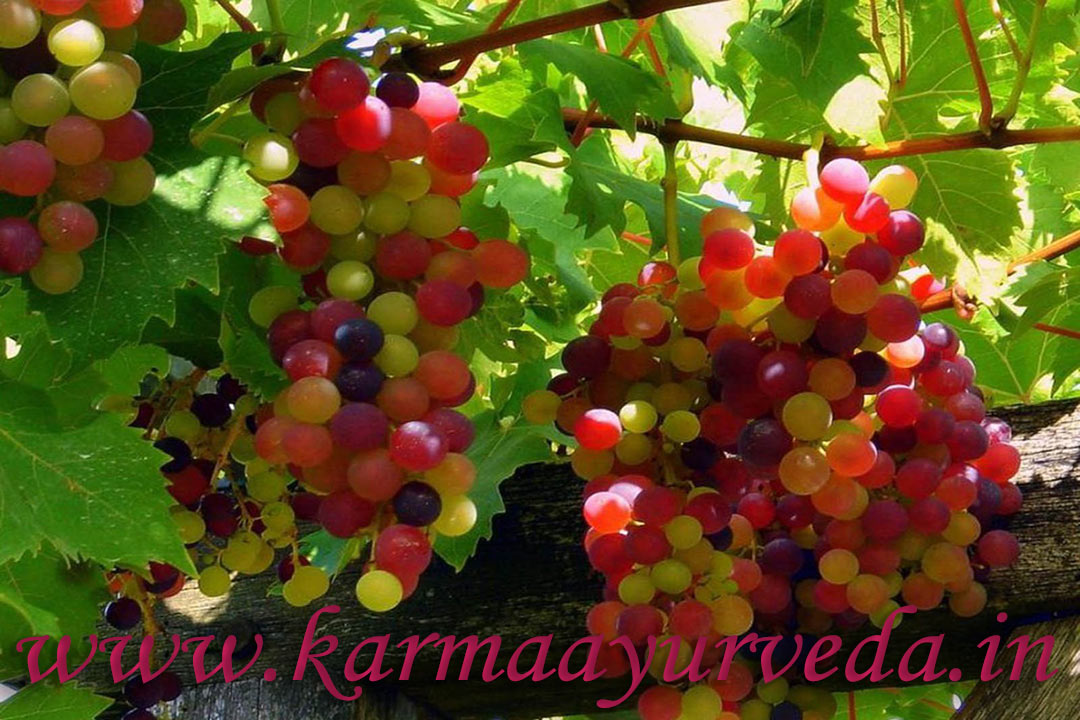 Red Grapes And Kidney Disease